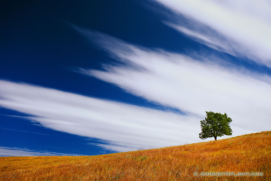 A tree stands witness through the ages upon a hill on the prairie at Wind Cave National Park, South Dakota. - South Dakota Photography