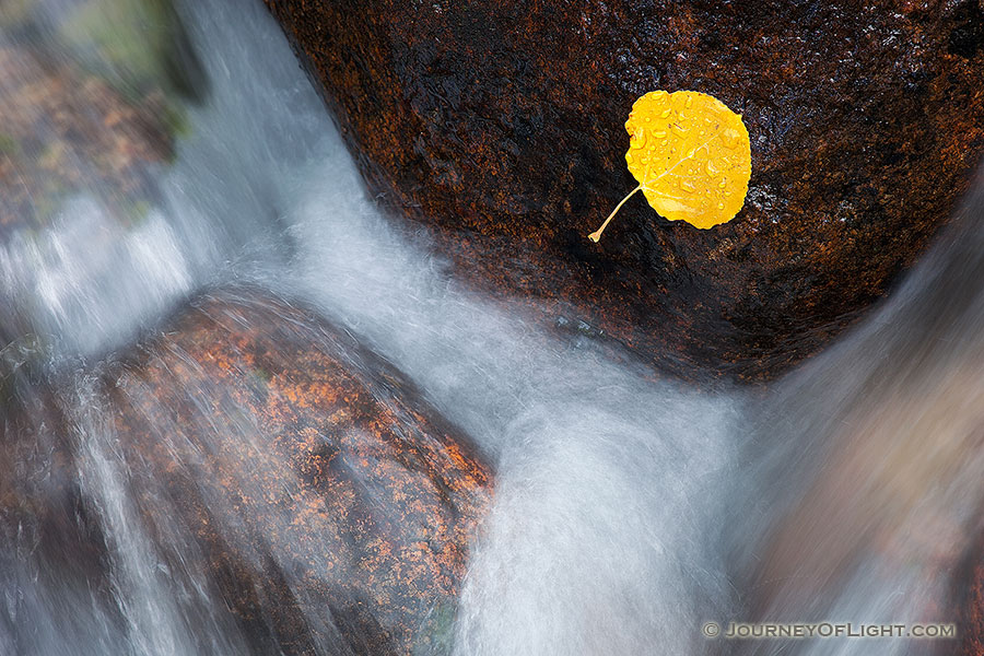 A lone fallen autumn aspen leaf grasps to a rock as the Big Thompson cascades by. - Colorado Photography