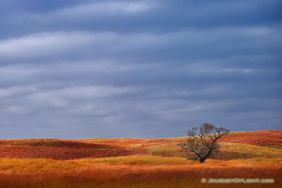A single tree sits upon the sandhills at Ft. Niobrara National Wildlife Refuge.