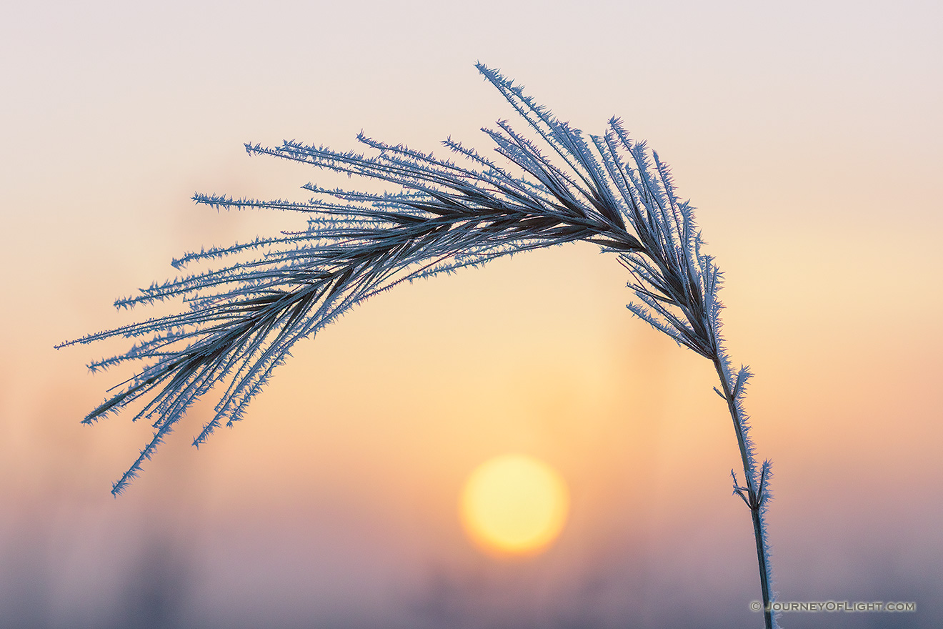 The warm sun rises to illuminate prairie grass coated in frost on the prairie at Boyer Chute National Wildlife Refuge in eastern Nebraska. - Boyer Chute Picture